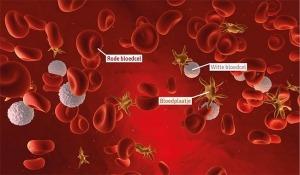 Bloedplaatjes